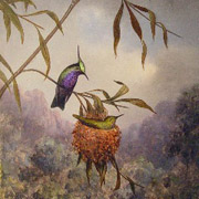 HEADE: Two Plovercrest Hummingbirds, 1864