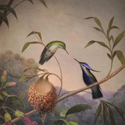 HEADE: Blue Crested Hummingbird, 1864