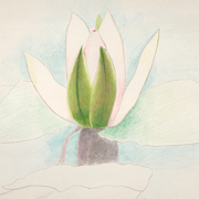 STELLA: Pink and Green Waterlily, c. 1920-25